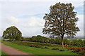 SO8383 : Heathland and footpath on Kinver Edge in Staffordshire by Roger  Kidd
