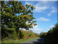 SO4319 : Oak tree alongside the B4521, east of Cherrytree Farm by Christine Johnstone