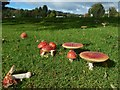 NS3881 : Fly Agaric by Lairich Rig