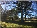 NT1266 : Parkland trees, Kirknewton by Alan Reid