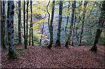 NH5966 : Viewpoint above the Allt Graad by Julian Paren