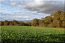 NH5857 : Colour in the Black Isle autumn landscape by Julian Paren