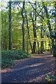 TQ2888 : In Highgate Wood : Week 44