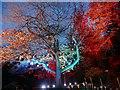 SK3386 : Illuminated tree in the Botanical Gardens by Graham Hogg