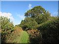 TG1640 : Bennington's Lane past Gunton Green by Hugh Venables