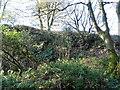 SD9707 : Overgrown rock face, Thurston Clough by JThomas