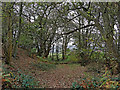 SO8681 : Worcestershire woodland east of Caunsall by Roger  Kidd