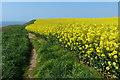 TA2469 : Oil seed rape at Flamborough Head by Mat Fascione