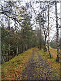 NJ0224 : Strathspey Railway Trackbed by Anne Burgess