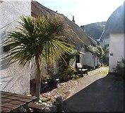 SX6739 : Thatched cottages at Inner Hope, Devon by Derek Voller