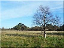 SU9782 : Gray's Field, Stoke Poges by Des Blenkinsopp