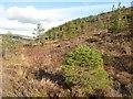 SH7561 : Open hillside by Jonathan Wilkins