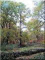SP9713 : Autumn at Clickmere Pond, Ashridge by Chris Reynolds