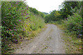 ST5497 : Former quarry track in the Wye Valley by Bill Boaden