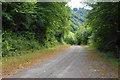 ST5497 : Track below Tintern Quarry by Bill Boaden