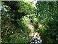 TQ5591 : Paine's Brook by Robin Webster