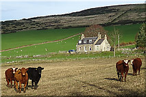 NJ2030 : Cottage and Cattle by Anne Burgess