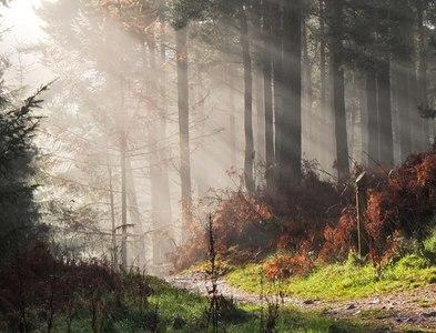 NT2438 : Sunlit forest, Cademuir by Jim Barton