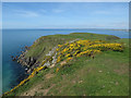 SX6838 : Gorse at Fernyhole Point by Hugh Venables