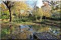 TQ1087 : A Small Woodland Pond by Des Blenkinsopp