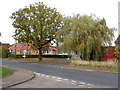 TL8925 : Moor Road, Great Tey by Adrian Cable