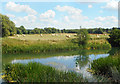 SU2398 : Riverside Landscape near Buscot by Des Blenkinsopp