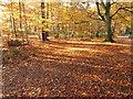 SU9584 : Autumn leaves in Burnham Beeches, near cafe by David Hawgood