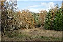 NJ1736 : Autumn Trees by Anne Burgess