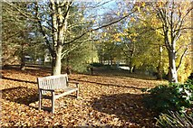 SE6250 : Carpet of leaves by DS Pugh
