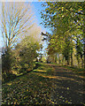 TF6319 : King's Lynn: once a railway by John Sutton