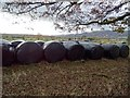SO7944 : Silage bales by Philip Halling