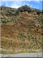 SX7836 : Cliff near East Prawle by Hugh Venables