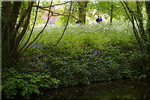 TL4458 : The Backs, Cambridge: view over drain into the grounds of King's College by Christopher Hilton