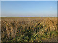 TL2291 : Fallow field, Whittlesey Mere by Hugh Venables