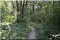 TQ1191 : LOOP, Oxhey Woods by N Chadwick