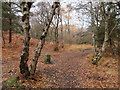 SJ2485 : Footpath on Thurstaston Hill and boundary stone #5 by John S Turner