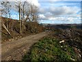 SH6340 : High level forestry track by David Medcalf