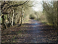 TQ3854 : Path above quarry face by Robin Webster