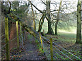 TQ3854 : Reduced headroom on footpath by Robin Webster