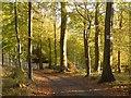 SU7787 : Great Wood, Hambleden by Andrew Smith