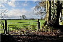 H5472 : Gate, Bracky by Kenneth  Allen
