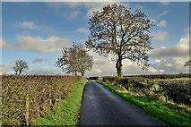 H5472 : Trees along Roeglen Road by Kenneth  Allen