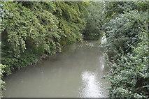 TL3949 : River Cam by N Chadwick
