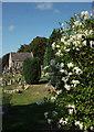 SX9065 : Potato vine, Torquay Cemetery by Derek Harper