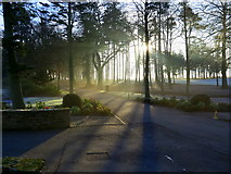 NZ1265 : Morning sun through the trees, Ravens Dene, Close House by Andrew Curtis