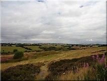 NZ1752 : Heathland at Kyo Bogs by Robert Graham