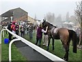 TF9228 : Steaming horses in the winners enclosure - Fakenham Racecourse by Richard Humphrey