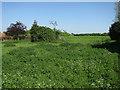 TL4069 : Open area in Willingham by Hugh Venables