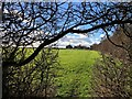 TL5165 : Winter hedgerow near Clayhithe by Katie
