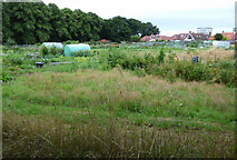 NS3421 : Allotments at Craigie Park by Thomas Nugent